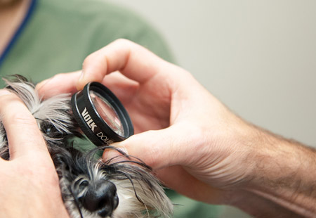 pet eye exam in toronto